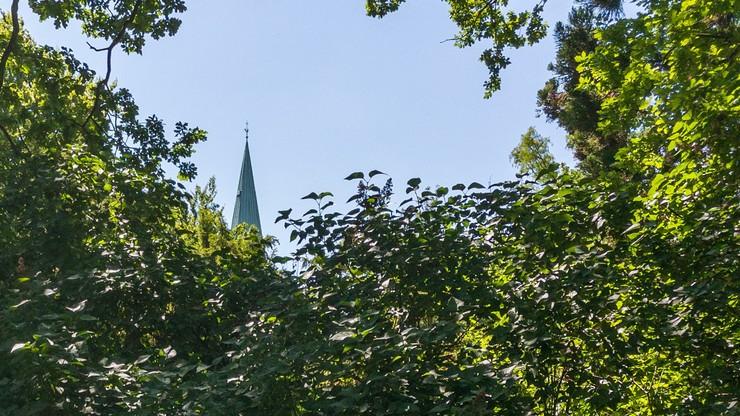 Billede af grønne træer og buske og toppen at et kirkespir i baggrunden
